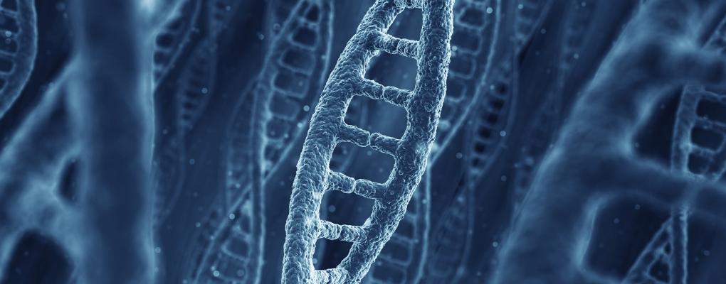 Epigenetic Mechanisms of Long-term Memory
